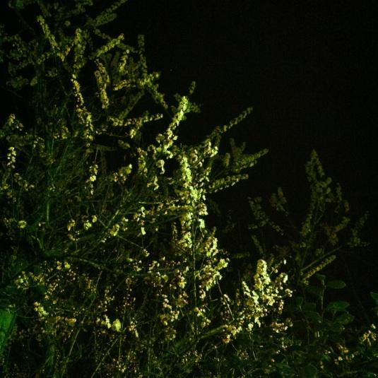 20120328-233118.jpg